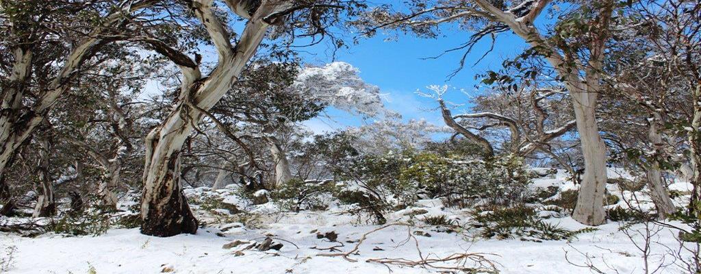 Snow-on-Mt-Benambra