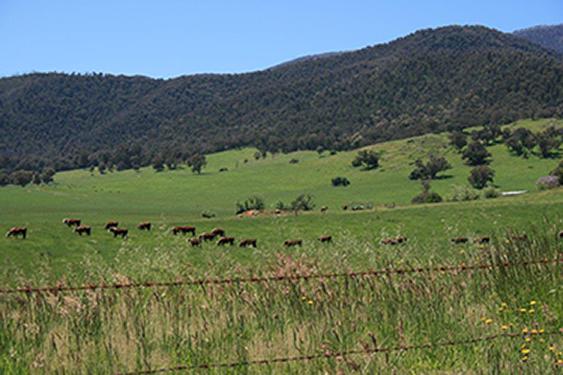 Banimboola Farm